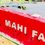 レンタル農園『シェア畑』を約3年続けてわかったメリット・デメリット|契約から収穫までの様子
