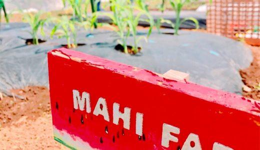 【子供の食育】家族で新鮮野菜作り!シェア畑の勧め