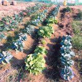 【子供の食育】とびきり美味しい春野菜を食べる準備「冬のシェア畑」