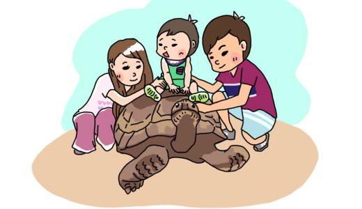 爬虫類だけの動物園「iZoo(イズー)」|おすすめはゾウガメの背中で記念撮影