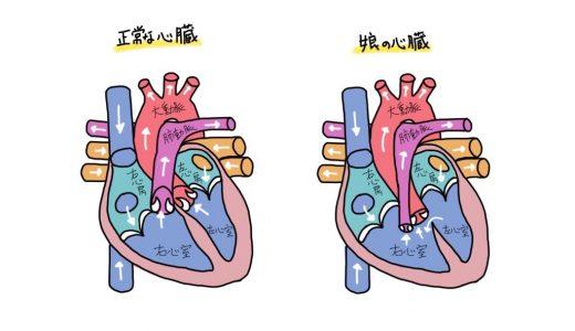 【無事出産】娘の先天性心疾患の詳細(図解入り)