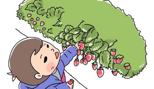 【1歳半】初めてのイチゴ狩りで苺を20個たいらげた息子